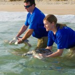 SeaWorld Orlando Celebra Un Año Récord de Animales Rescatados